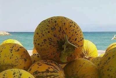 Cesme Melon